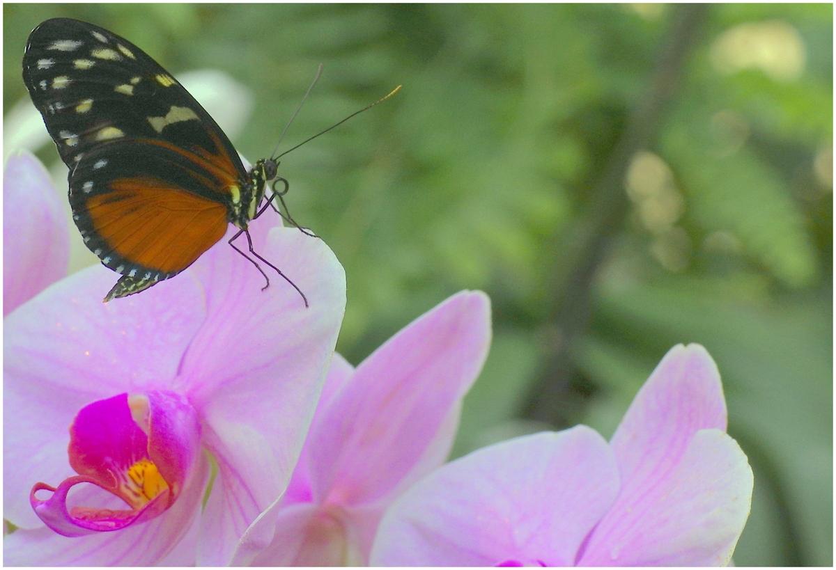 Papillons en Fêtes 2015 16825224429_b8352e285e_o