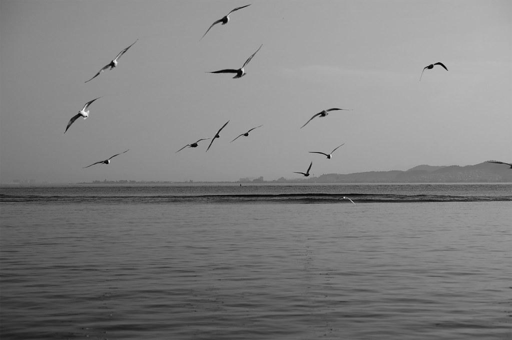 birds|滋賀県大津市