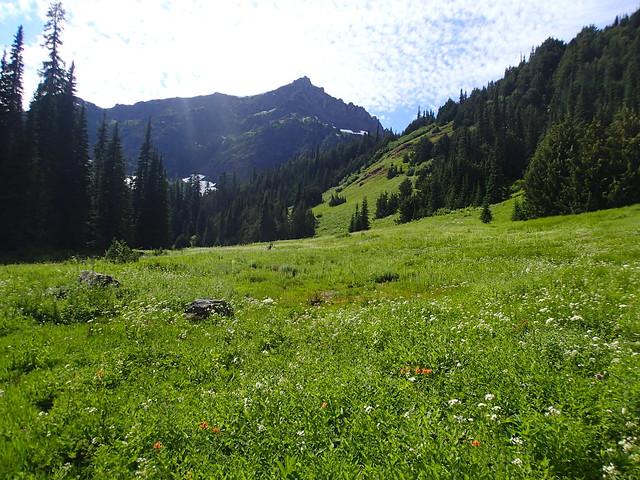 Dose Meadows