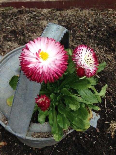 Spring at Pickity (4)
