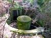WW2 Spigot Mortar Emplacement (7)