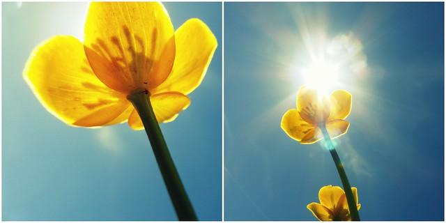 against springtime lethargy ;-)