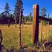 Old Corral North of Flagstaff, Arizona. by Rickd248