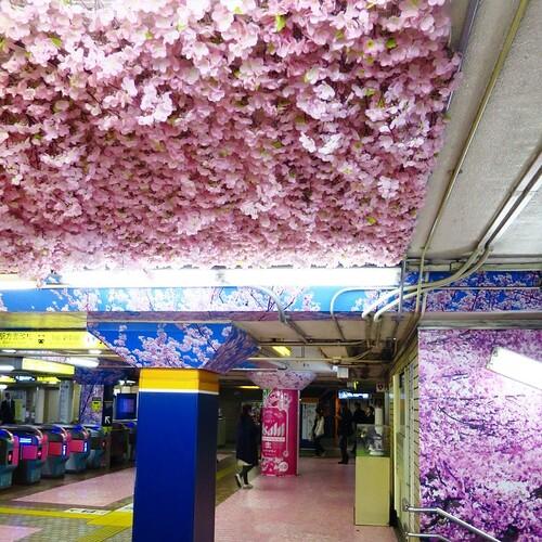 銀座線上野駅改札あたりが、なんかすごいことになってた。桜満開というか、全開。