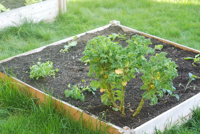 gardenbedplanted1