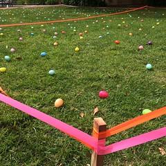 Hardest #EasterEggHunt ever. #easter #eastereggs