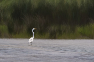 egret in the lake textured