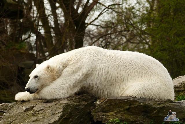 Tierpark Berlin 12.04.2015 19