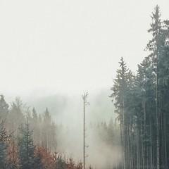 tree in foggy solitude