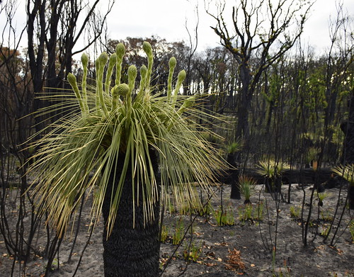 New Life after the fire in Northcliffe