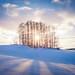Winter light by Vocalonation @necrophantasia on twitter!
