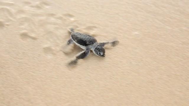 Turtle-Island-2