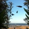The famous flying fish of Portobello as seen from the Espy #scotland #edinburgh #portobello #instascots