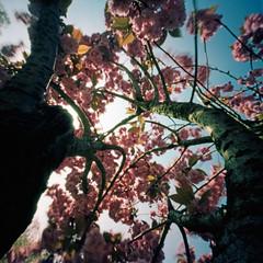 Like a Bird on a Branch