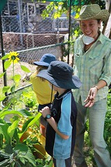 29 August, 2014 - 10:20 - permaculture in gulf school gardens