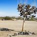 Shoe Tree, East Jesus, Slab City by shadowplay