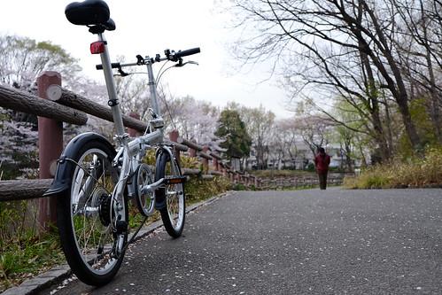 Hanami Ride