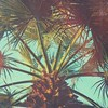 Good morning :palm_tree:  #palmtreeobsession #arizona #instagramaz #VSCOcam #mexturesapp #vscomextures #jj_creative #jj_mextures #jj_vscomextures #formula_sharing_is_caring XKQFPYP