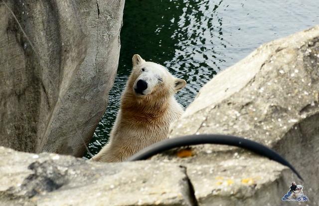 Zoo am Meer 07.03.2015   89