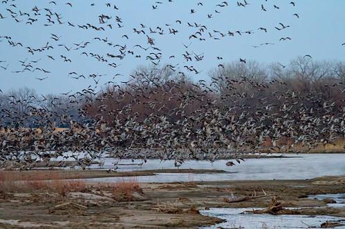 sunset river island nebraska eagle crane grand platte sandhill