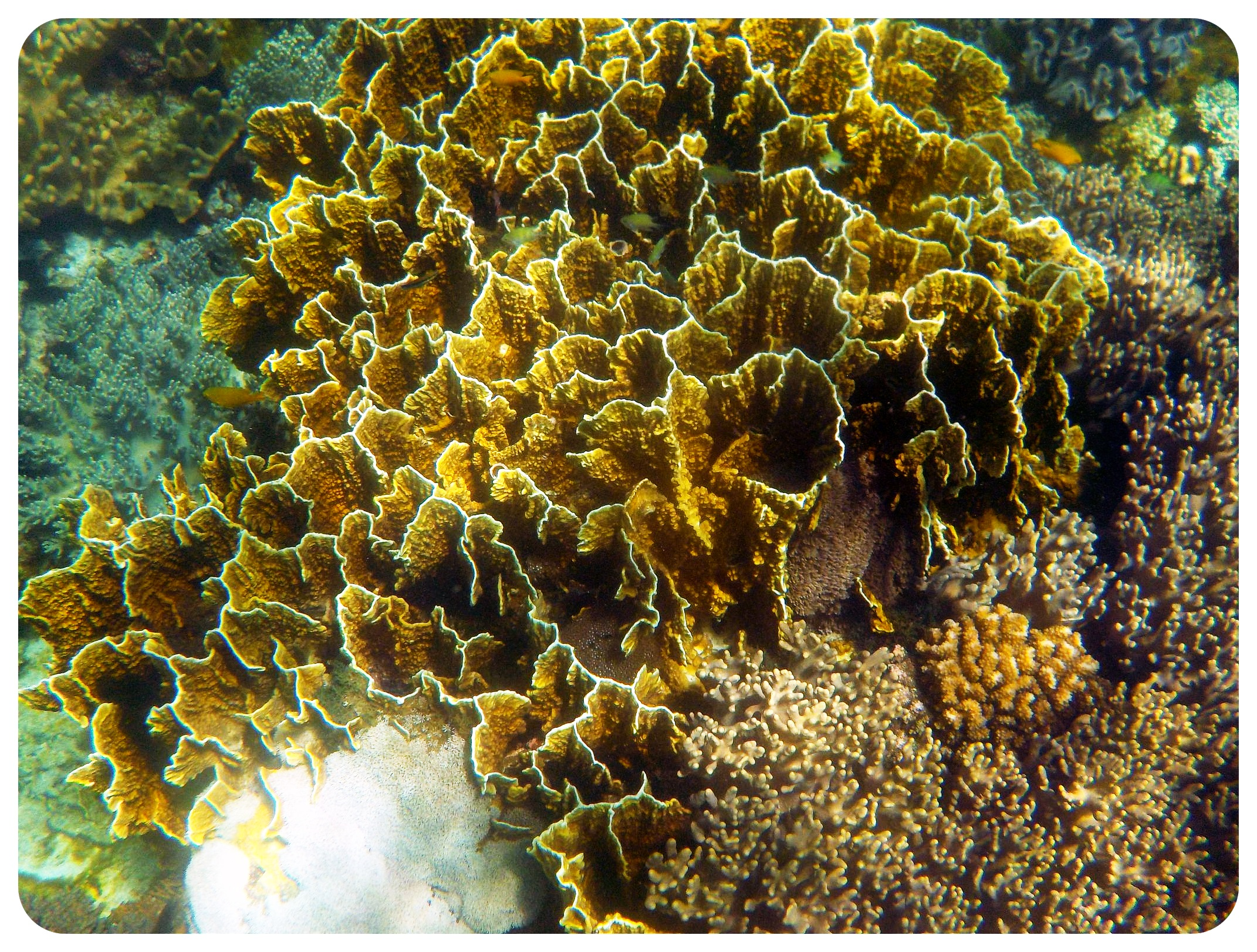 apo island underwater world philippines