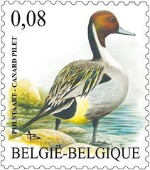 00b Canard pilet 0,08 timbre