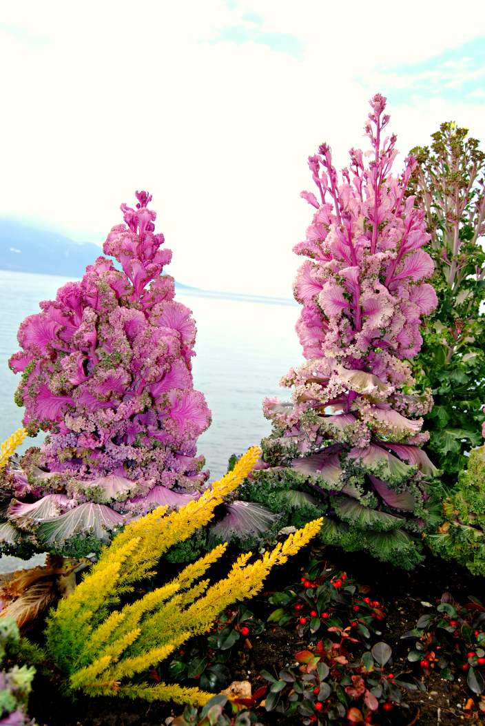 Montreux_Go Travel (9)