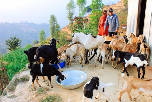 Nepal Update: Farmland diversifies; 3 women rescued from traffickers