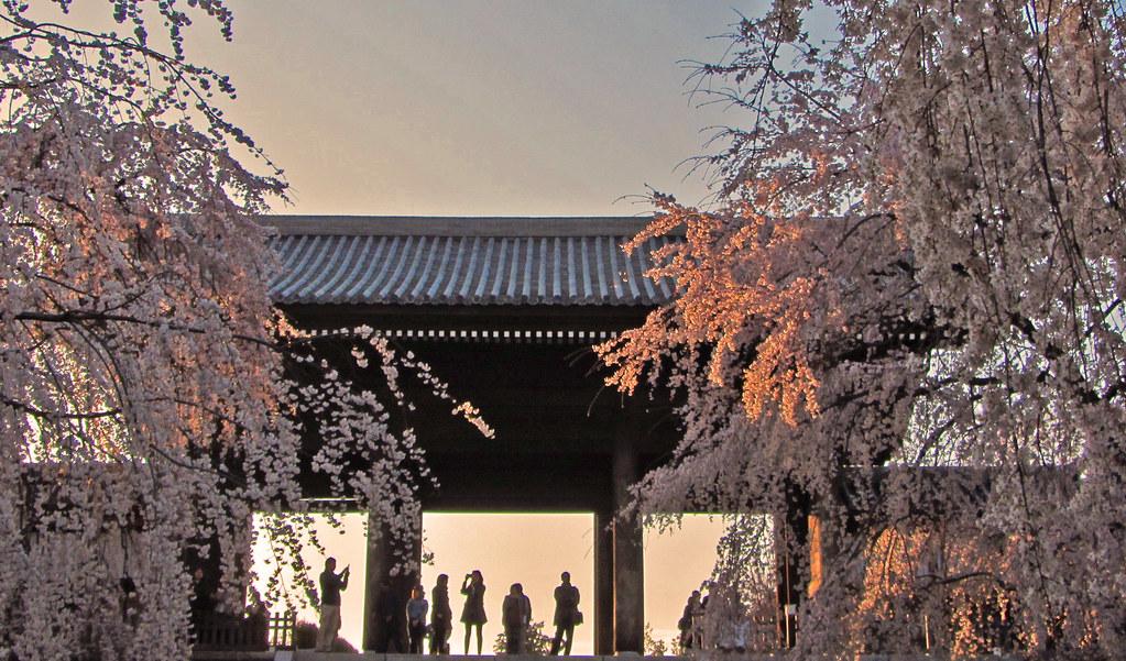 Togo-ji's Cherry Blossom and girls silhouetto Tokyo Fuchu