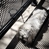 """""""They won't notice I am here."""" Having brunch last weekend at Austin's in #FortCollins #Colorado, pets are not allowed in the dining areas. So, you need to tied them up outside. Our dog wasnt having that! Underneath she went! #FunnyThingsDogsDo"""