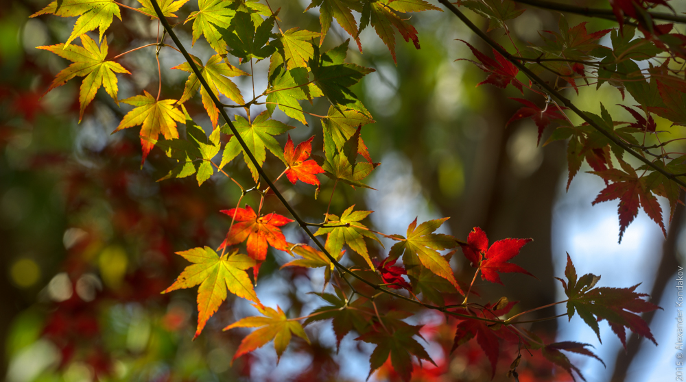 20150422 Mount Lofty Botanic Garden-27