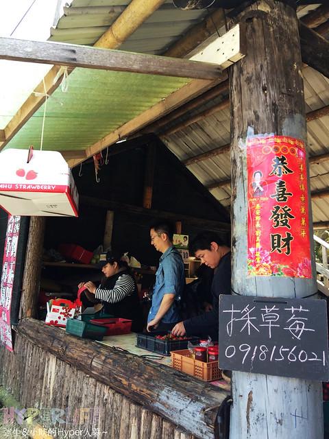 苗栗劉正男高冷草莓園  (1)