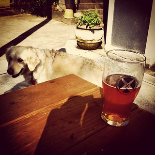 Out with the dog at Ex Novo Brewing