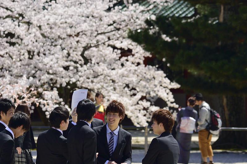 桜の京都 平安神宮