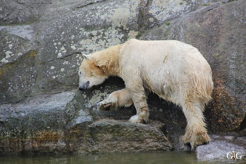 Oster-Montag im Zoo Berlin 06.04.201526