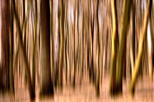 The Surreal vision of forest.....