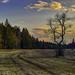 Abendhimmel über der Waldlichtung by Helmut Reichelt