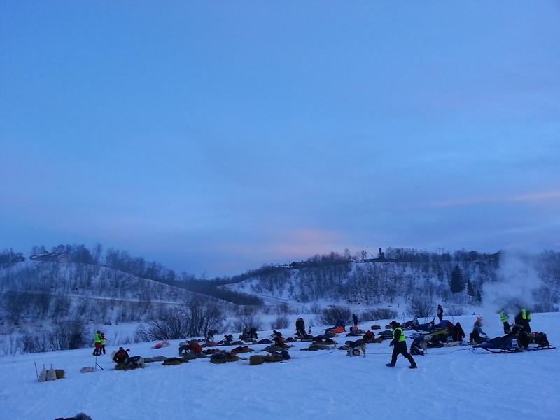 Teten i Finnmarksløpet 2015 ligger og hviler på sjekkpunktet Neiden 2. Foto: Eirik Fløtlien