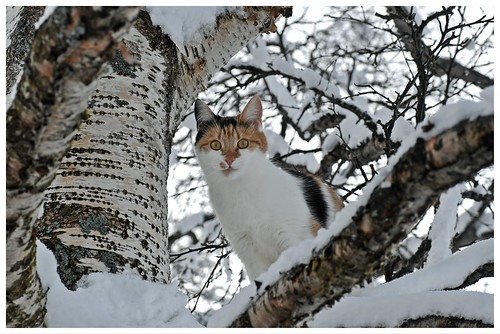 snowy trees can be tricky to climb, but I`m an expert now......::))