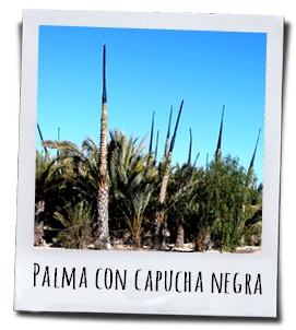 Palmen met een zwarte kap, om het proces van fotosynthese tegen te gaan