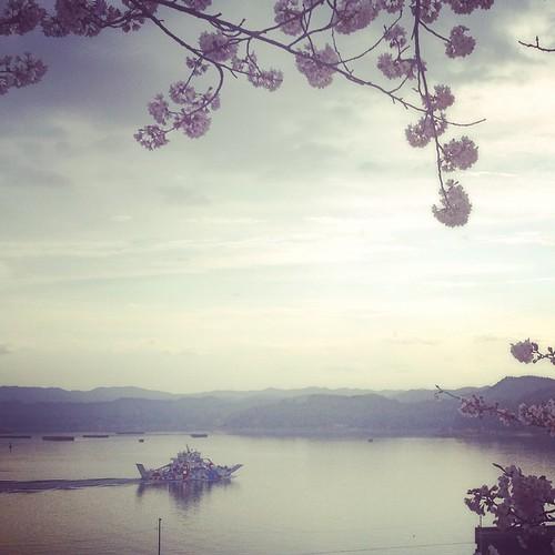 百島行きフェリー「百風」と桜
