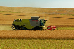 La récolte du grain