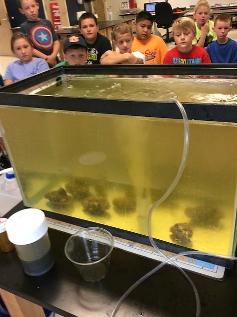 Filtering Plankton