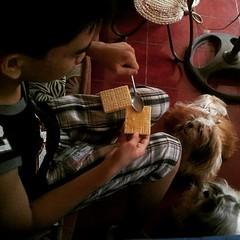 Waiting for that cheese cracker sandwich □ #cute #ShihTzu #pets #ShihTzuPhilippines