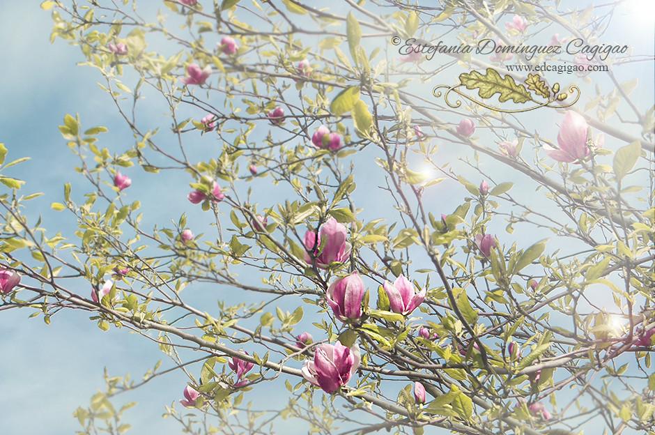 https://www.flickr.com/photos/edcagigao/16637069963/