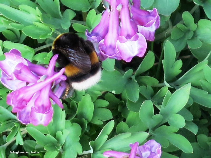 Bee in wild flowers