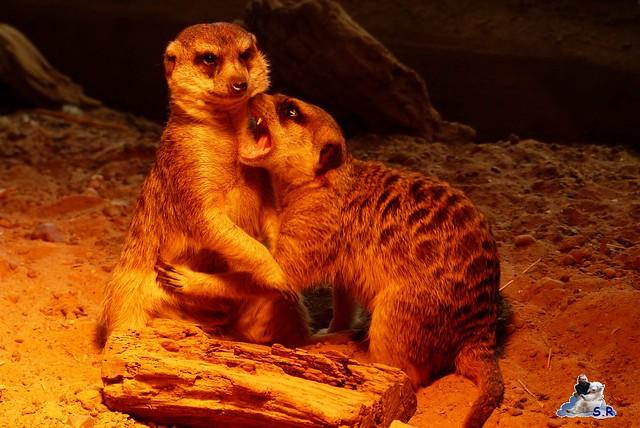 Eisbär Taufe Fiete Zoo Rostock 31.03.21015 260