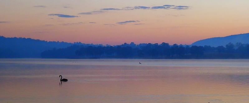 Sunrise with Swan, Lake Moogerah