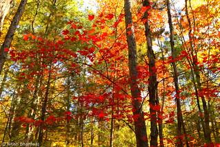 Fall colors [Explored 23 Mar. 2015]