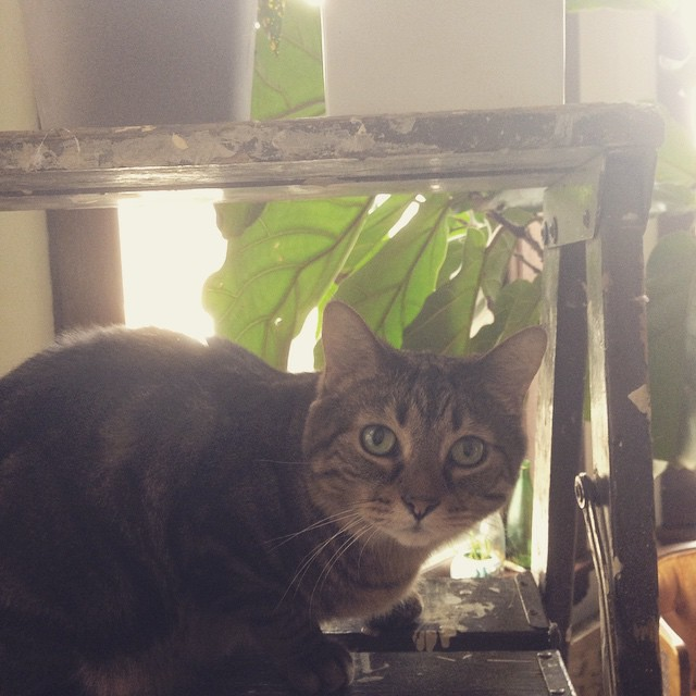 Urban jungle kitty. #catsofinstagram #lasso